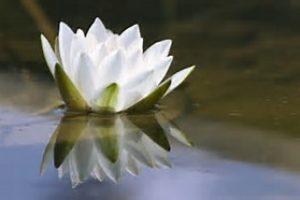No Mud, No Lotus – a Powerful Forgiveness Workshop